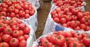 Benarkah Makan Tomat Bisa Meningkatkan Kesuburan Pria? - JPNN.com