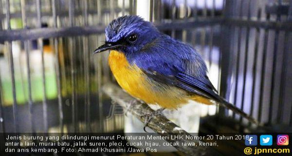 Indonesia Memiliki Jumlah Spesies Burung Terbanyak di Dunia, Tetapi.. - JPNN.COM
