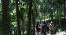 KLHK Siapkan Bibit Pohon Untuk Rehabilitasi Hutan dan Lahan - JPNN.com