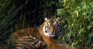 Berita Duka, Yudiansah Harianto Meninggal Dunia Diserang Harimau - JPNN.com