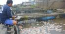 DKP3 Ungkap Penyebab Kematian Puluhan Ton Ikan di Sungai Martapura - JPNN.com