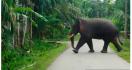 Gajah Merusak Rumah yang Dibangun Pemerintah - JPNN.com