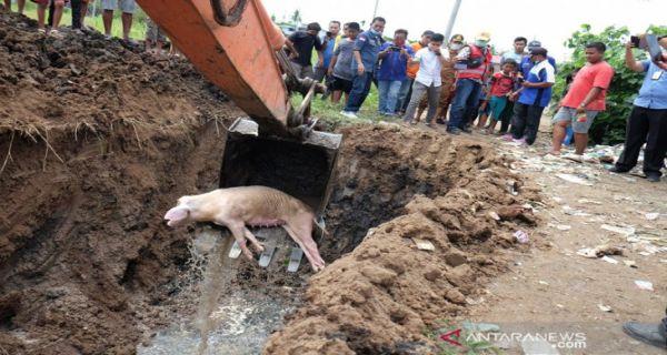 Info Terbaru dari Kapolda Sumut Soal Kasus Pembuangan Bangkai Babi - JPNN.COM