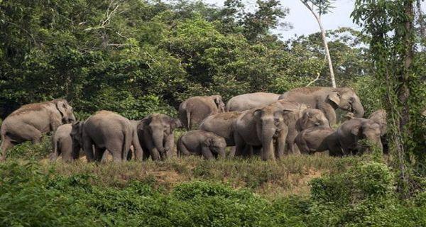 Puluhan Rumah Transmigran di Nagan Raya Rusak Diamuk Gajah Liar - JPNN.COM