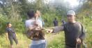 Dua Ekor Gajah Ditemukan Mati di Aceh Jaya - JPNN.com