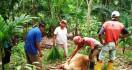 Diteror Harimau Sumatera, Warga Agam Langsung Antisipasi Begini - JPNN.com