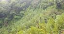 Polres Jakarta Barat Temukan 5 Hektare Ladang Ganja di Mandailing Natal - JPNN.com