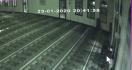 Pria Berbadan Tegap Itu Sudah Empat Kali Bobol Kotak Amal Masjid, Siapa Dia? - JPNN.com