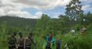 Ladang Ganja Seluas 4 Hektare di Aceh Utara Dimusnahkan, nih Fotonya - JPNN.com