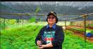 Menteri Siti: Arah Pembangunan KLHK pada 2020 Sejalan dengan Program Prioritas - JPNN.com